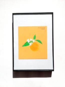 sweet-orange-2