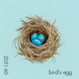 birds egg716