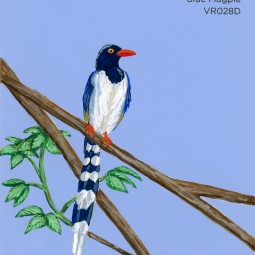 blue magpie416