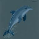 bottlenose dolphin559