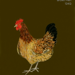 brown hen709