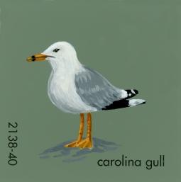 carolina gull504