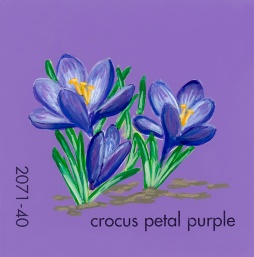 crocus petal purple591