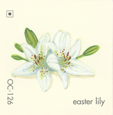 easter lily585