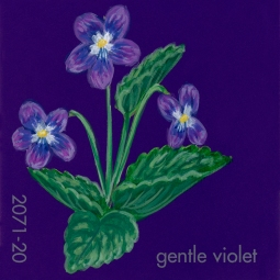 gentle violet690