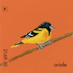 in the forest oriole318