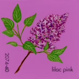 lilac pink332