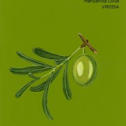 manzanilla olive419