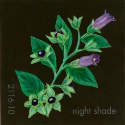 nightshade598
