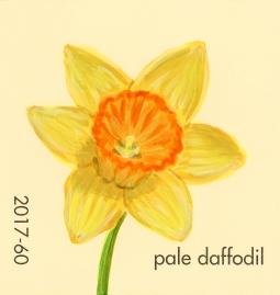 pale daffodil648