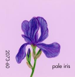 pale iris689