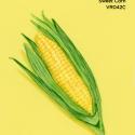sweet corn392
