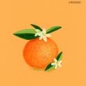 sweet orange502