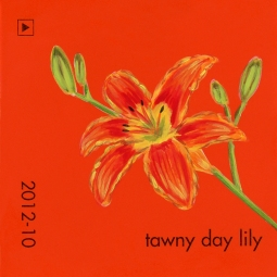 tawny day lily628