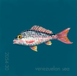venezuelan sea309
