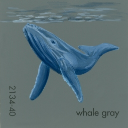 whale gray505