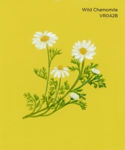 wild chamomile498