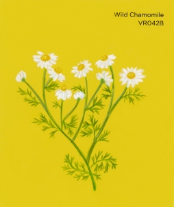 wild chamomile710