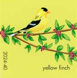 yellow finch320