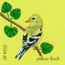 yellow finch715