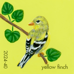 yellow finch715