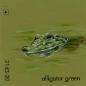 alligator green752