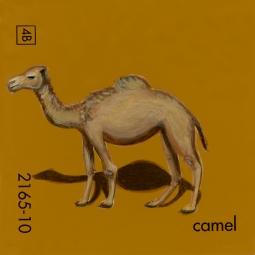 camel753