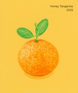 honey tangerine757