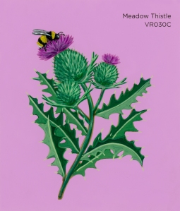 meadow thistle769