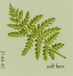 soft fern762