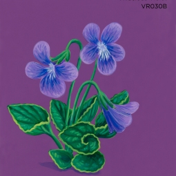 vivacious violet768