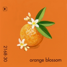 orange blossom788