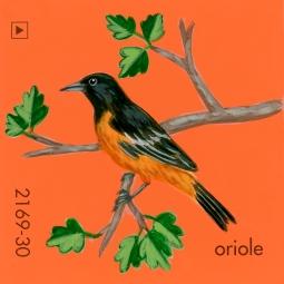 oriole832