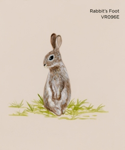 rabbits foot779