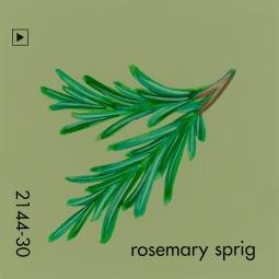 rosemary sprig803