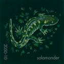 salamander828