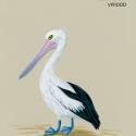 soft pelican780