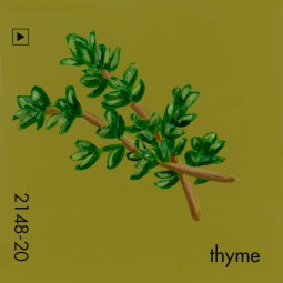 thyme808