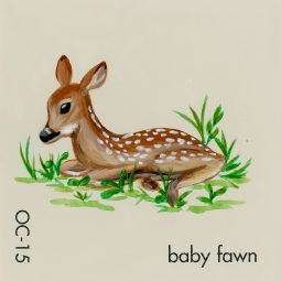 baby fawn882