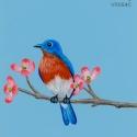 blue bird morning896