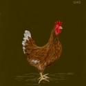 brown hen900