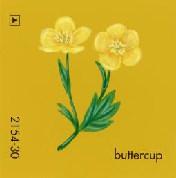 buttercup880