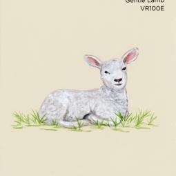 gentle lamb894