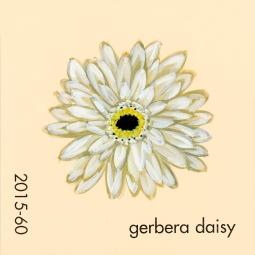 gerbera daisy847
