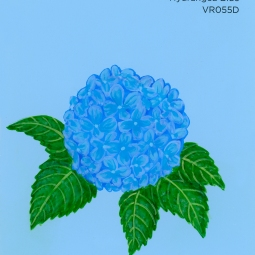 hydrangea blue919