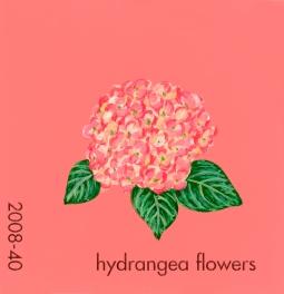 hydrangea flowers886