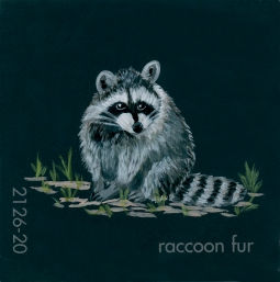 racoon fur881