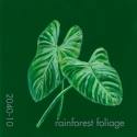 rainforst foliage878