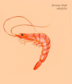 shrimp shell844