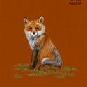 sly fox893